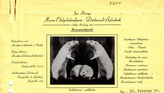 Briefkopf der Pelztierfarm Westfalen, 1951 (Sammlung Klaus Winter)